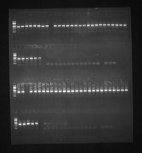 PCR results
