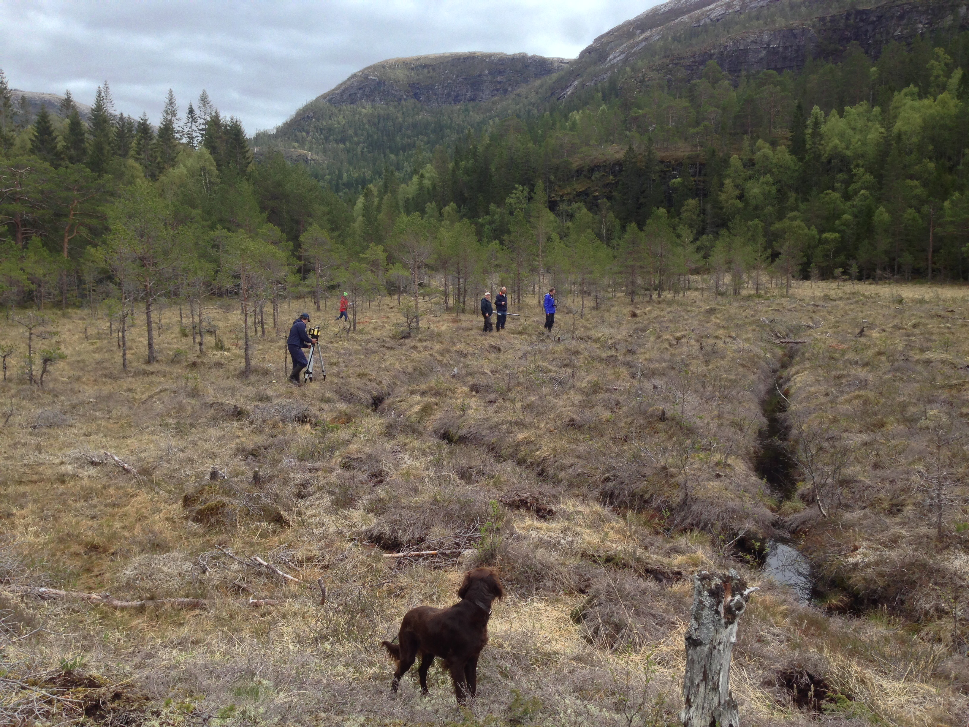 Equipment is placed and the ditched inspected. The mires have been effectively drained with ditches placed ca. 8-12 meters apart. Some pine and birch are now found on the mires as an effect of the drainage. In the background you can see some of the forestof the nature reserve. Photo: Marte Fandrem, NTNU University Museum
