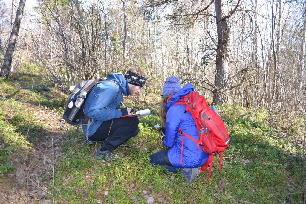 Lukas Tietgen and Kjirsten Coleman registering coordinates and measuring height of even the smallest individuals of the alien trees.
