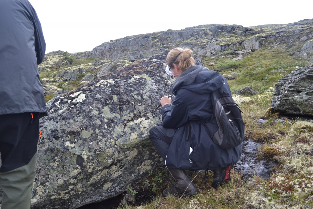 Master's student Erik Johan Møller taking samples of lichens – which is best done with a hammer and chisel. Proper safety attire includes goggles