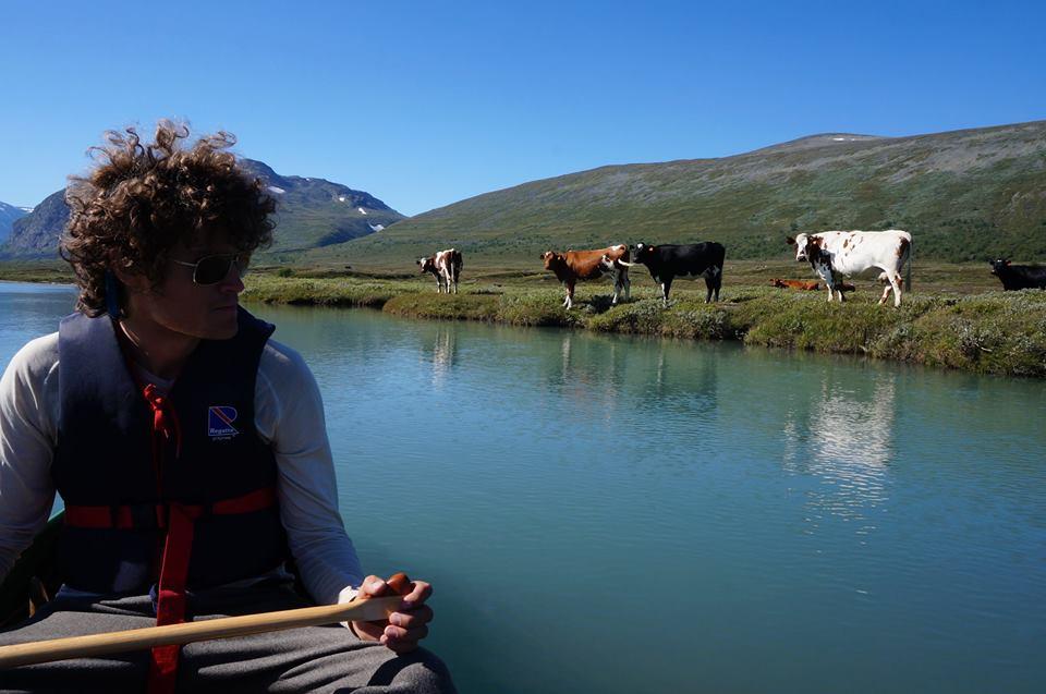 Husdyr som kuene i bildet har blitt fåtallilge på utmarksbeite i Norge. Økningen i antall hjortedyr har vært tilsvarende positiv. Fra Smådalen i Vågå kommune. Forfatteren i forgrunnen studerer seterkulturen fra trygg avstand