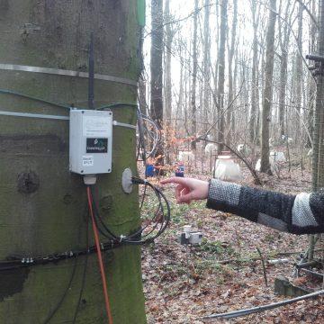 Denne bøka er utstyr med en måleinstrument som registrerer bevegelsen av sevja under barken. Registeringene skjer hvert 15. min og sendes direkte ut på nett, dag etter dag, og år etter år. Med disse dataene kan forskere si noe om tørkestress og hvordan skogen reagerer på klimaendringene.