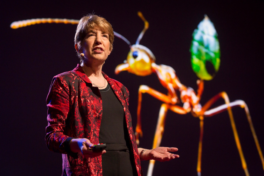 Marlene Zuk, prominent evolutionary biologist and behavioral ecologist, has been trying to encourage more fact-based discussions about gender in the scientific community