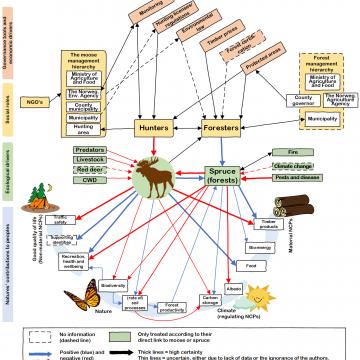 Slik ser kunnskapskartet til EcosystemMoose ut i dag. Pilene og boksene er klikkbare og tar leseren til en kort og sammenfattet tekst som oppsummerer temaet. Selve strukturen til figuren formidler relasjoner mellom variabler i det kompliserte sosio-økologiske systemet sentrert rundt elgen i de norske skoger. Kunnskapskartet er under kontinuerlig revisjon og endrer seg når ny informasjon kommer til. Kilde: ecosystemmoose.com.