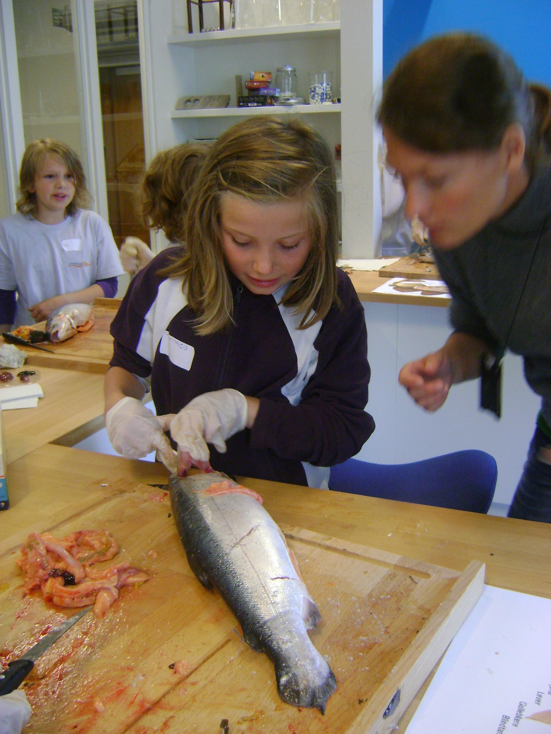 Dissekering av fisk