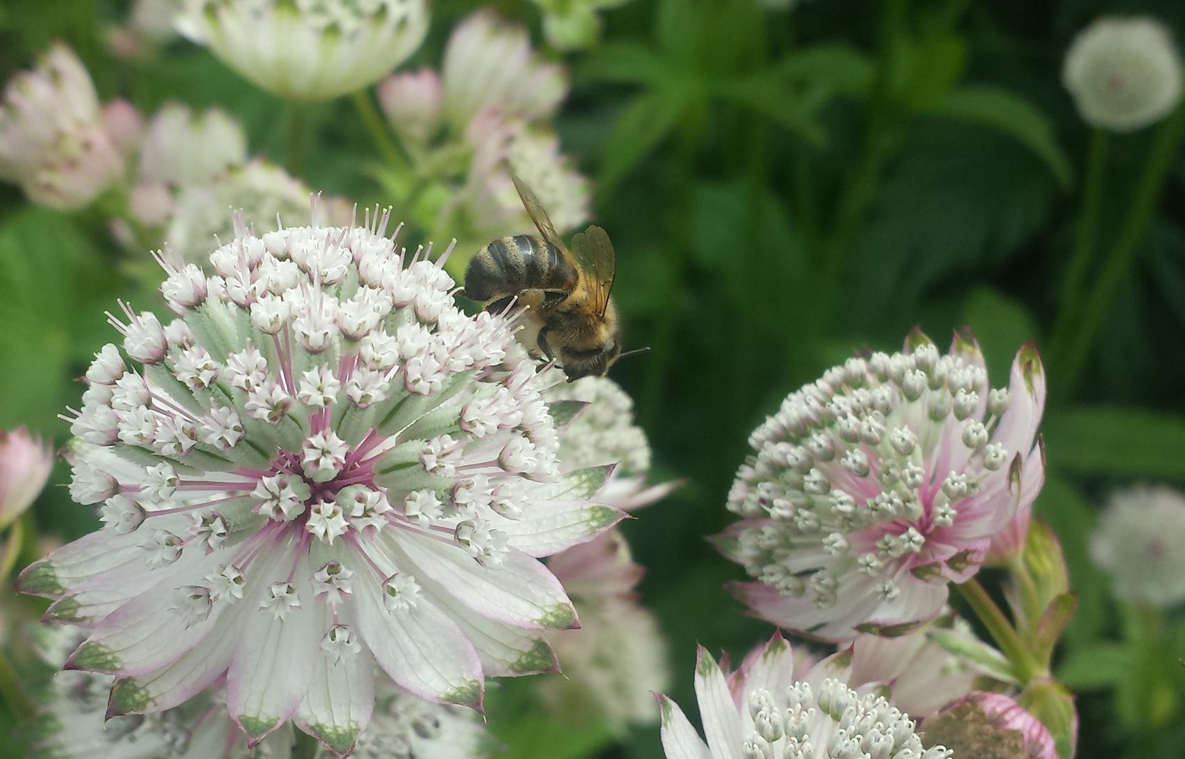 Konklusjonen er klar: Insekter og Ringve botaniske hage er et herlig forskerspiretema. Foto: Falla Maria Boudakaat